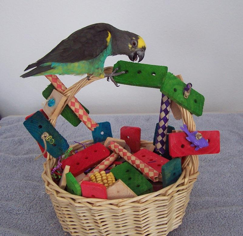 DIY Parrot Basket Play Area
