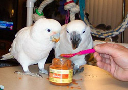 Healthy Parrot Snacks