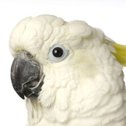 Parrot's and Air Quality