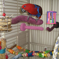 Optimal Environment for your Parrot