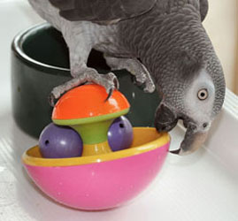 The Importance of Parrot Play