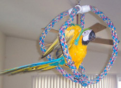 How to Get Your Parrot to Exercise