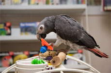 Cleaning Parrot Toys and Cage