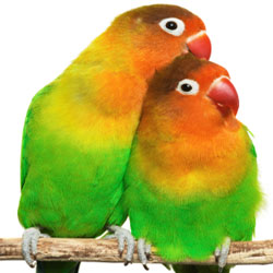 Safe Cleaning agenst for parrots