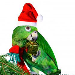 Parrot Holiday Safety
