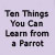 Ten Things You Can Learn from a Parrot