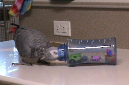 Recycled Water Bottle Foraging Parrot Toy