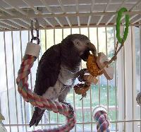 Parrot with Foraging Bread Toy