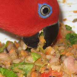 Changing Parrots Diet