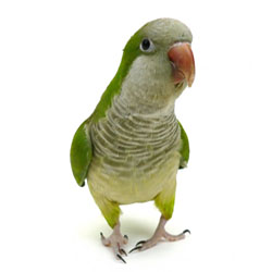 Reducing Parrot Stress