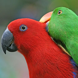 Safe Household Cleaners for Parrots